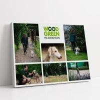Woodgreen Collage Image